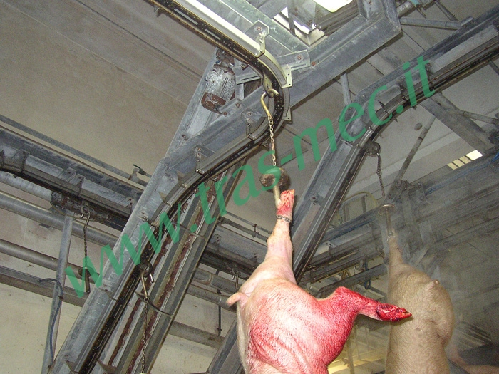 Monorail conveyor for a pig slaughtering company